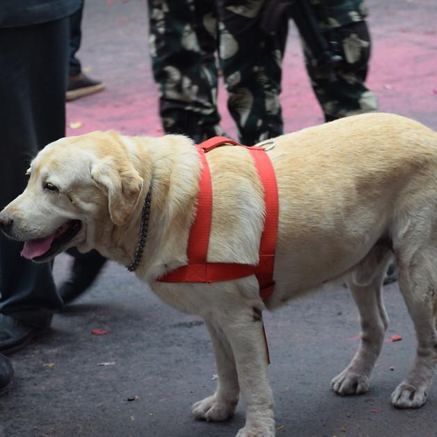 Army Dog..