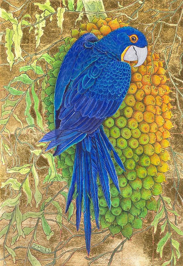 hyacinth macaw.jpg