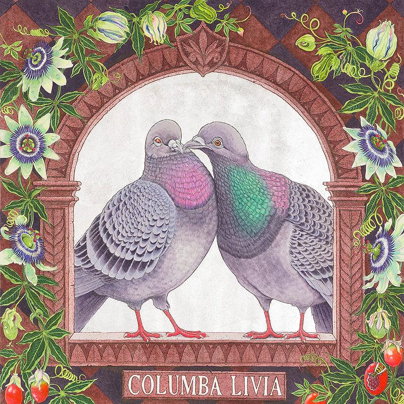 Columba Livia.jpg