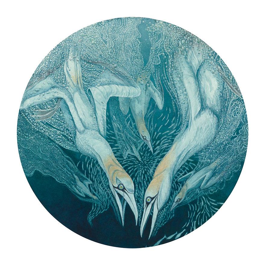 """northern gannets"" watercolour  ""diving birds"""