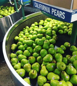 California Bartlett Pears, can't get muc