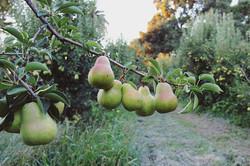 Orchard views 🙌🏻 ·_·_·_·_·_·_· ·_#calp