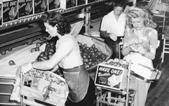 Packing Pears in 1943