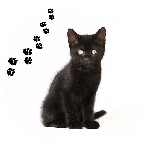 Black Cat- BKC