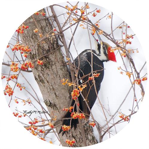 Pileated Woodpecker - KMPW1