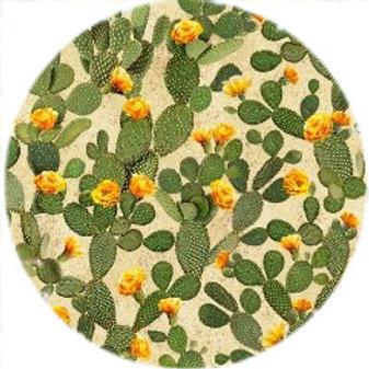 Prickly Pear Cactus - 72