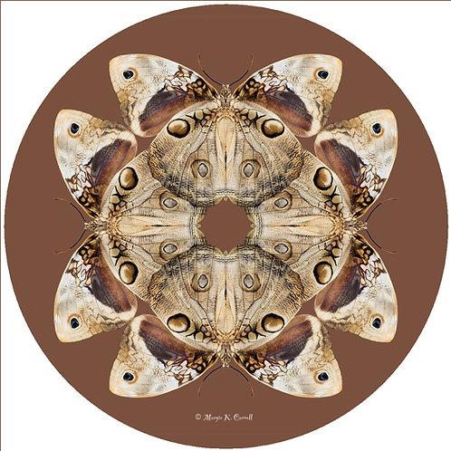 Brown Moth - MC BM