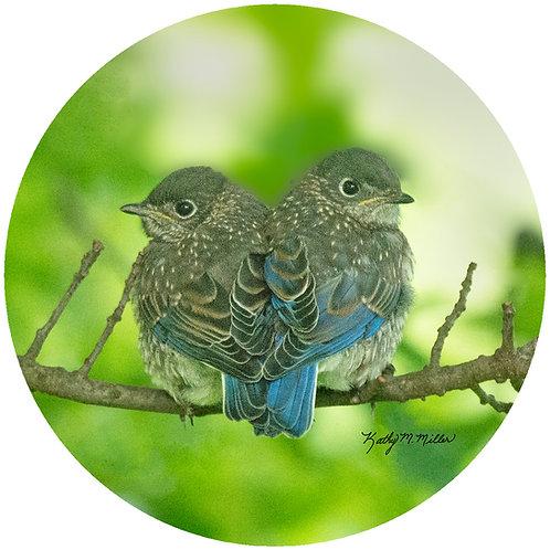 Baby Bluebirds - KMBB5