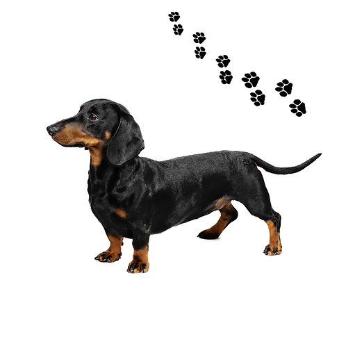 Dachshunds Black- DB