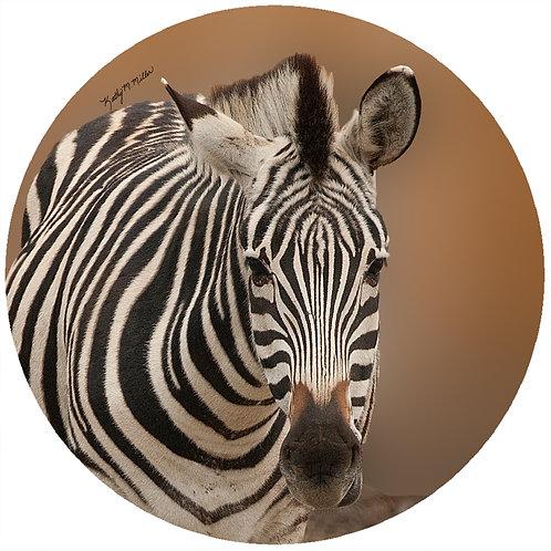 Zebra - KMZ1