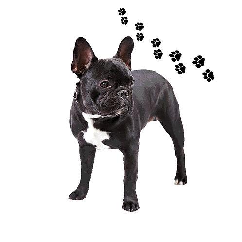 French Bulldog- FB