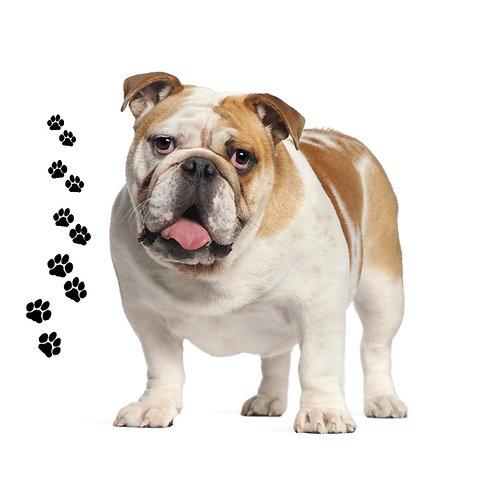 Bulldog- BD