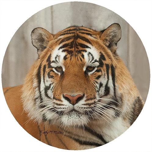 Tiger - KMTG1