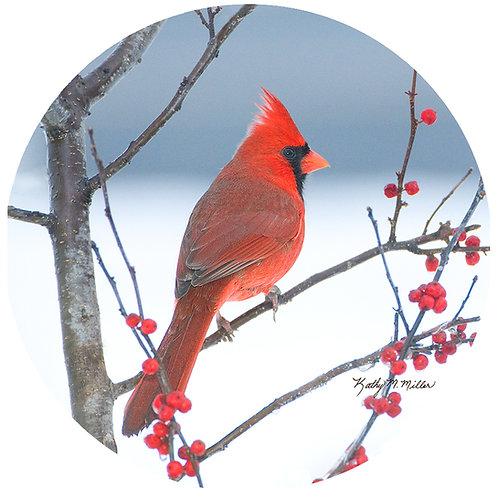 Cardinal - KMC2
