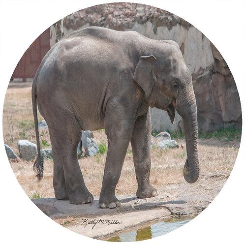 Elephant - KME1