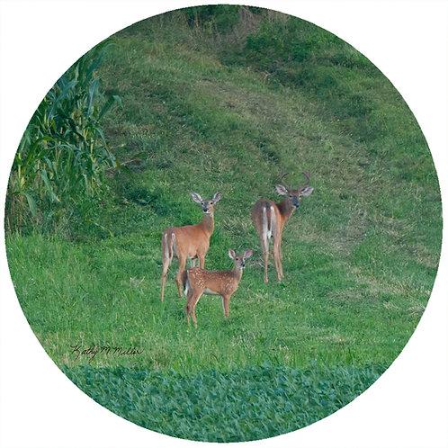 Deer Family - KMD1