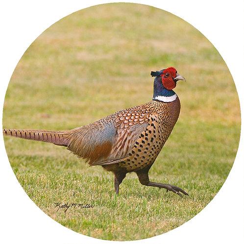 Pheasant - KMP2
