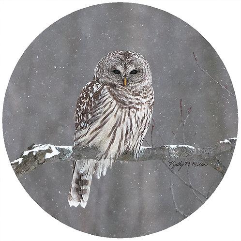 Owl - KMBO1