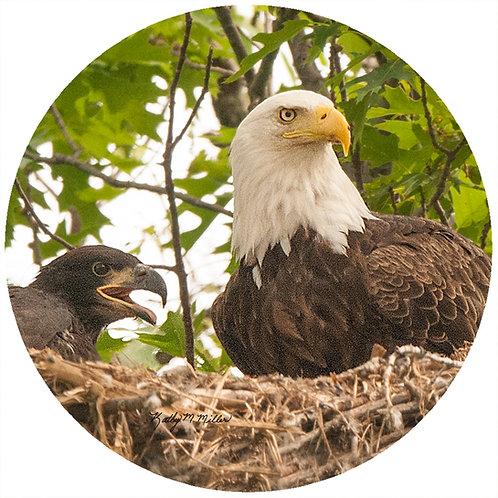 Bald Eagle - KMBE1