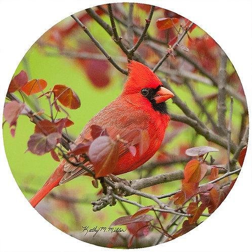 Cardinal - KMC1