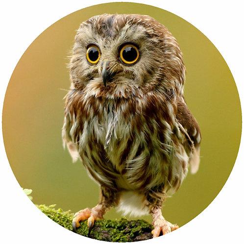Owl - CO