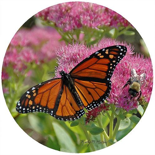 Butterfly - KMB1