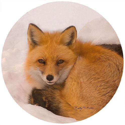 Fox - KMF1
