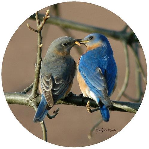 Bluebird Couple - KMBB1