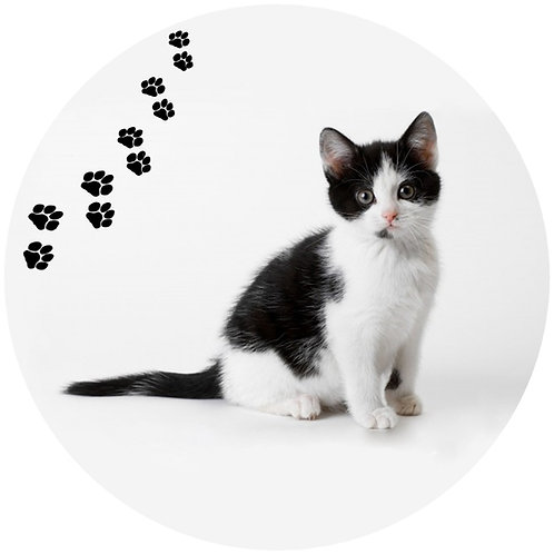 Black & White Cat- BW