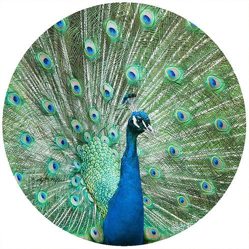 Peacock - KMPC1