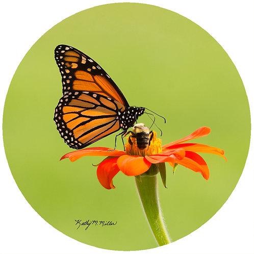 Butterfly - KMBF3