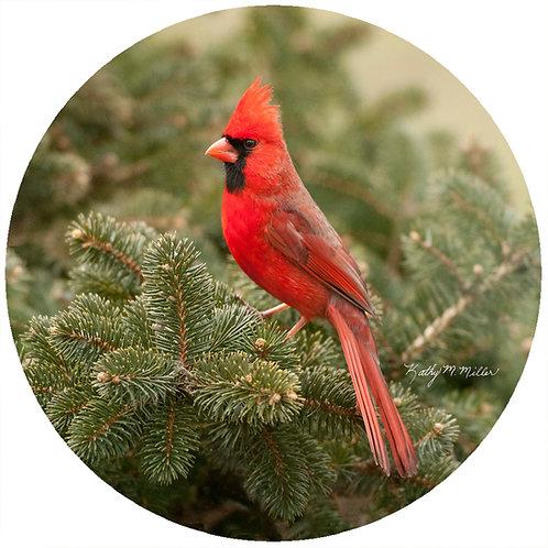 KM Cardinal Evergreen - KMC5