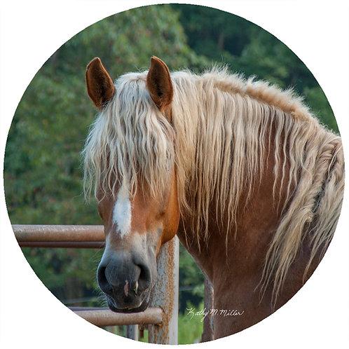 Horse Head - KMHO2
