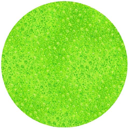 Lime - 20