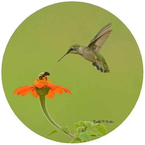 Hummingbird & Bee - KMHB2