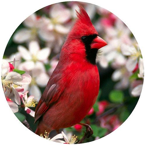 Cardinal - CC