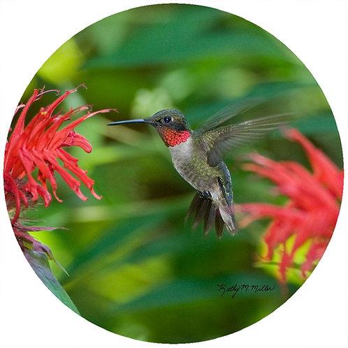 Hummingbird - KMHB1