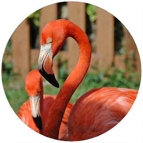 Flamingo - KMFL1