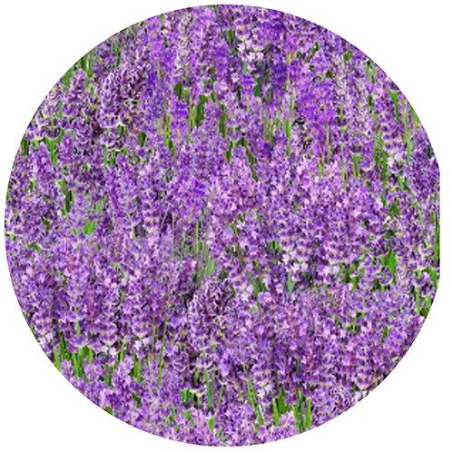 Lavender Medley - 374