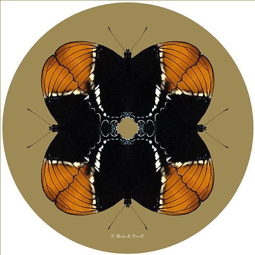 Butterfly - MC BOB