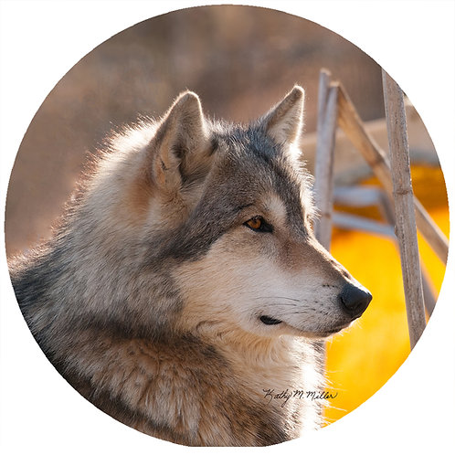 Wolf with Yellow - KMW2