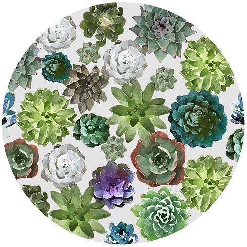 Succulents - 365