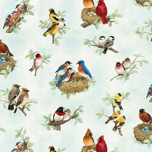 Beautiful Birds - 168