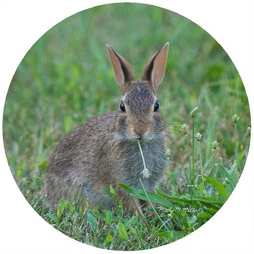 Rabbit in Grass - KMRB2