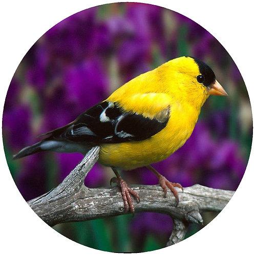 Goldfinch - CGF