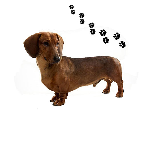 Dachshunds Red- DR