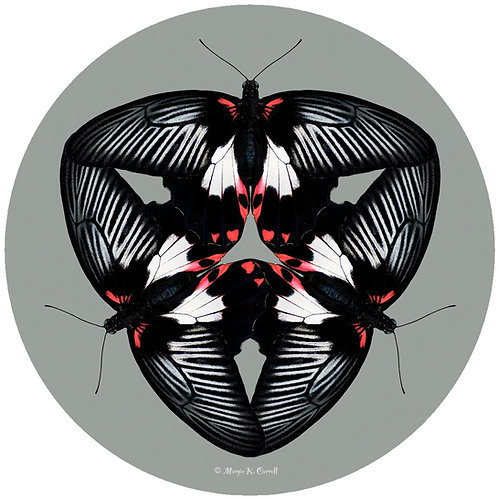 Black Red Butterfly - MC BRB