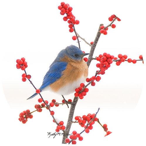 Bluebird - KMBB2
