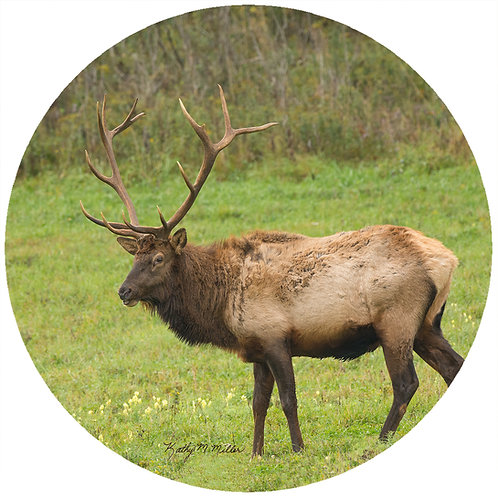 Elk Standing - KMES2