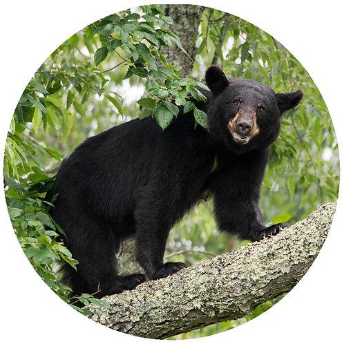 Bear Leaves - BL